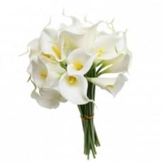 Цветы Каллы белые