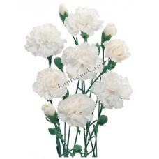 Цветы Гвоздики Белые