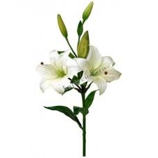 Цветы Лилии Белые